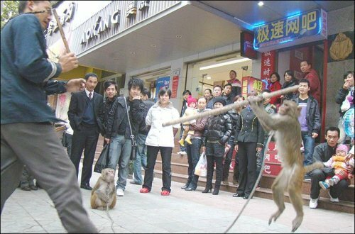 Kung Fu Monkey Attacks Trainer - 1